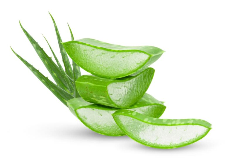 aloe-vera-fresh-leaves-slices