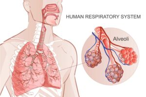 The respiratory system, an unsuspected emunctory organ