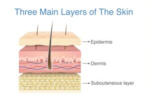 The skin an organ that reflects our health